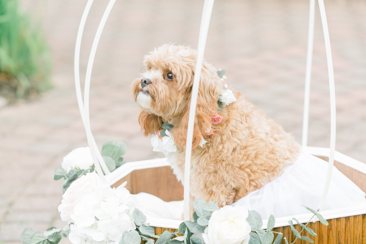 dog-photo-Wedding-Photographer-Jennifer-Lam