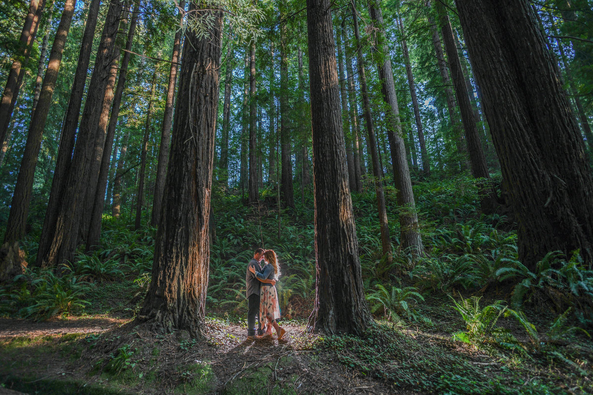 Redway-California-engagement-photographer-Parky's-Pics-Photography-Humboldt-County-redwoods-Avenue-of-the-Giants-Humboldt-Redwoods-State-Park-engagement-12.jpg