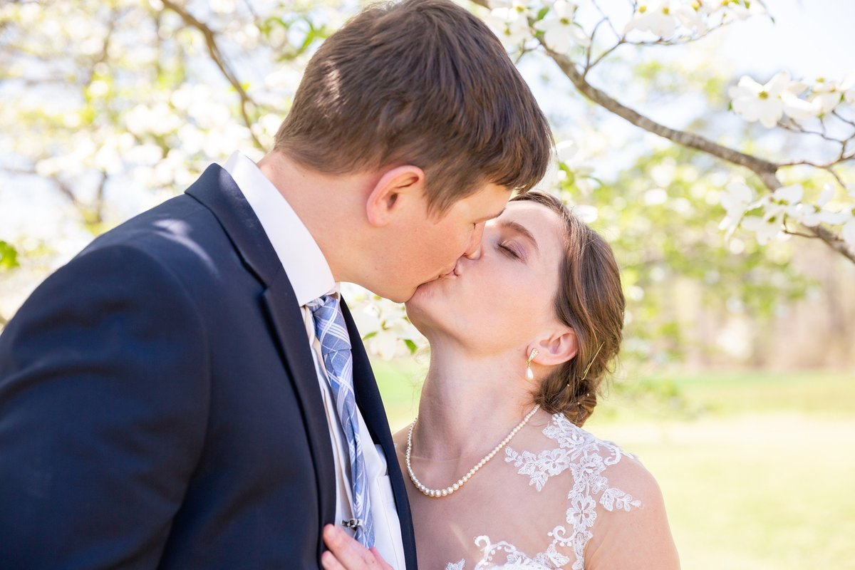 bride and groom kissing in front of a dogwood tree at their country wedding in Virginia