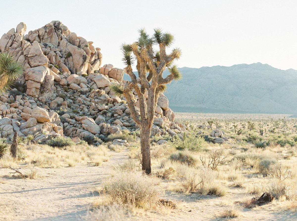 joshua-tree-california-engagement-photographer_0303