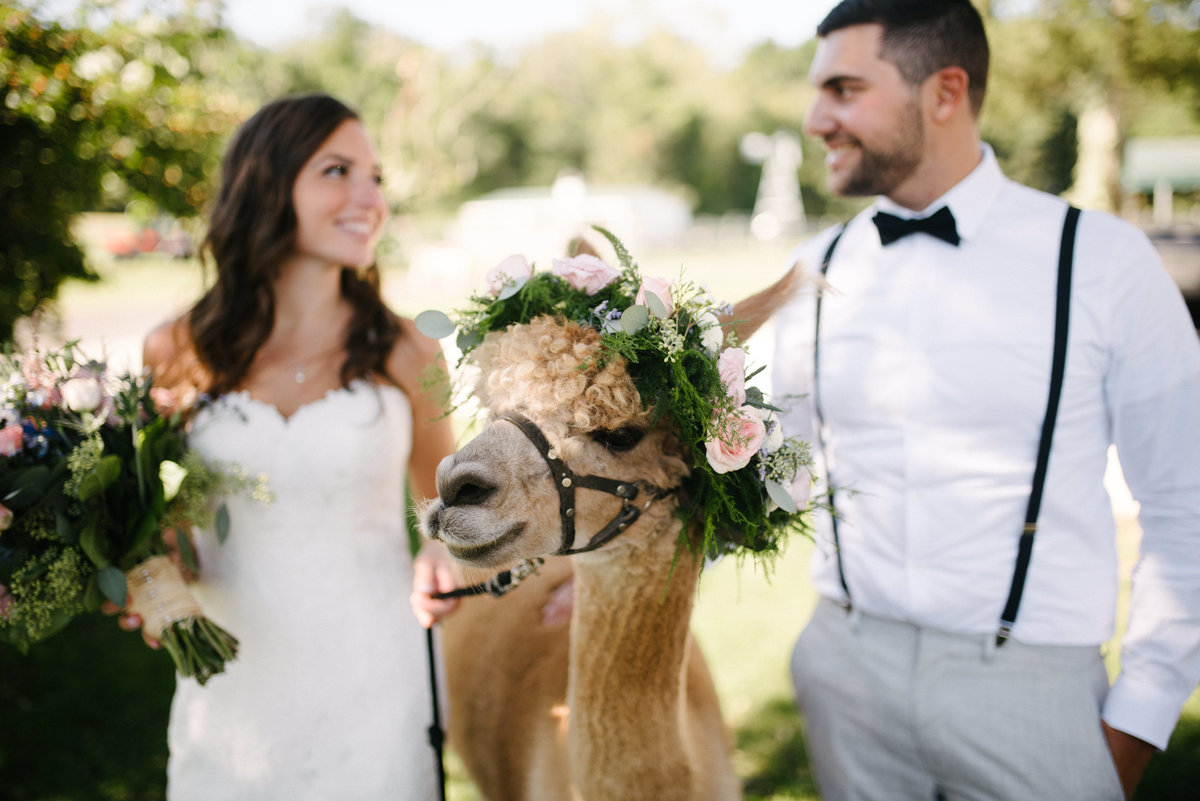 alpaca farm wedding nj