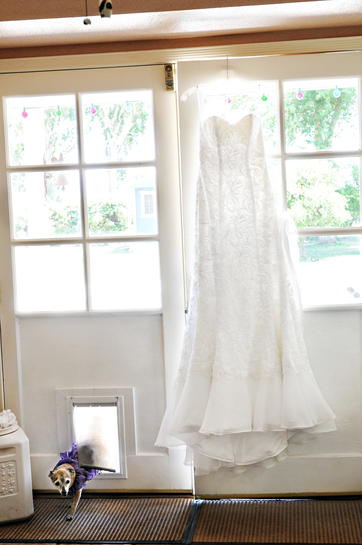 wedding dress with dog in home in yuma, az