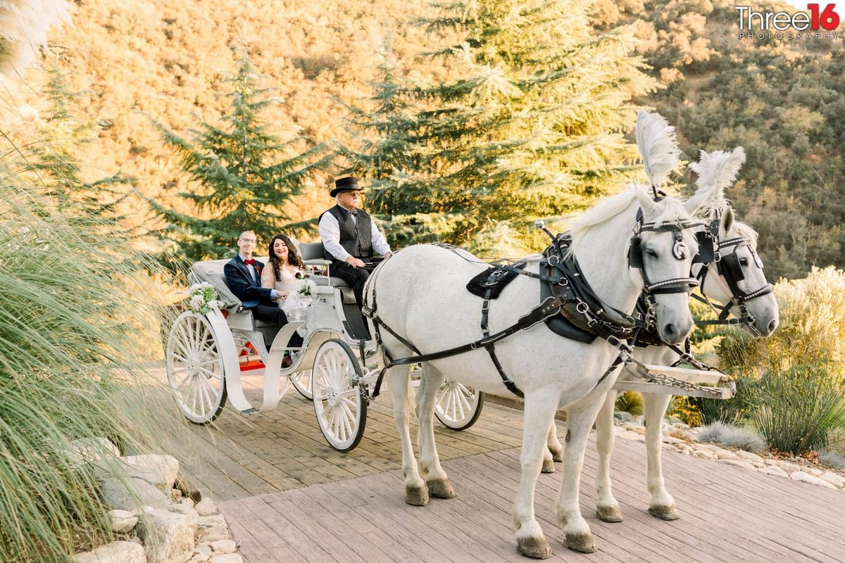 Bride and Groom ride in a horse and buggy
