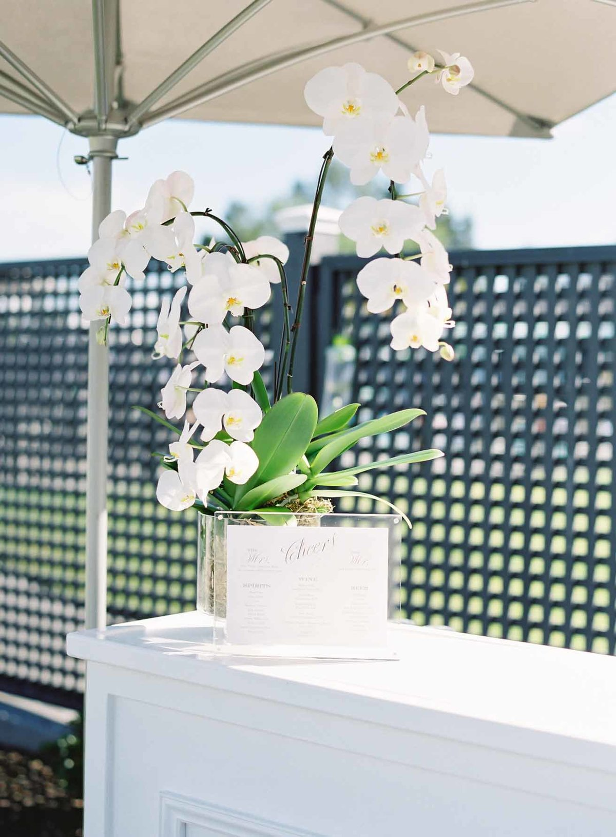 Beautiful potted white phalaenopsis orchid for bar at wedding reception