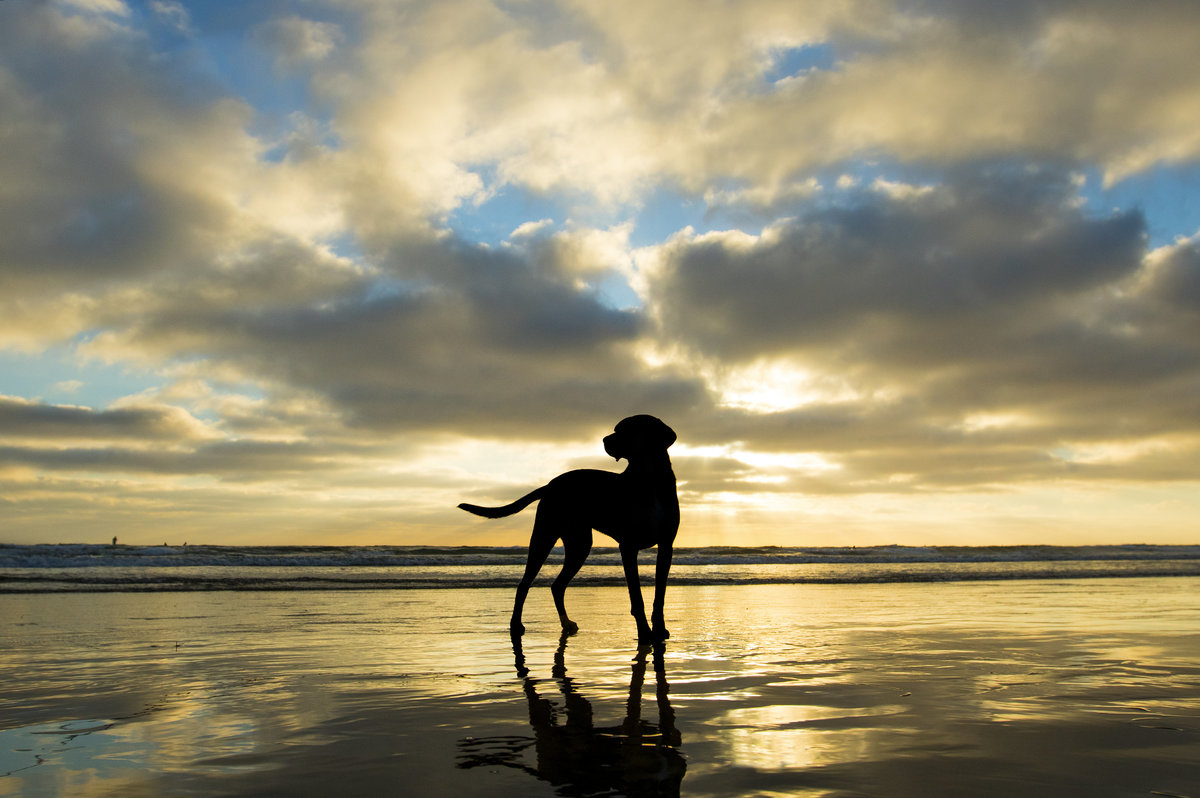dog photographer san diego 2