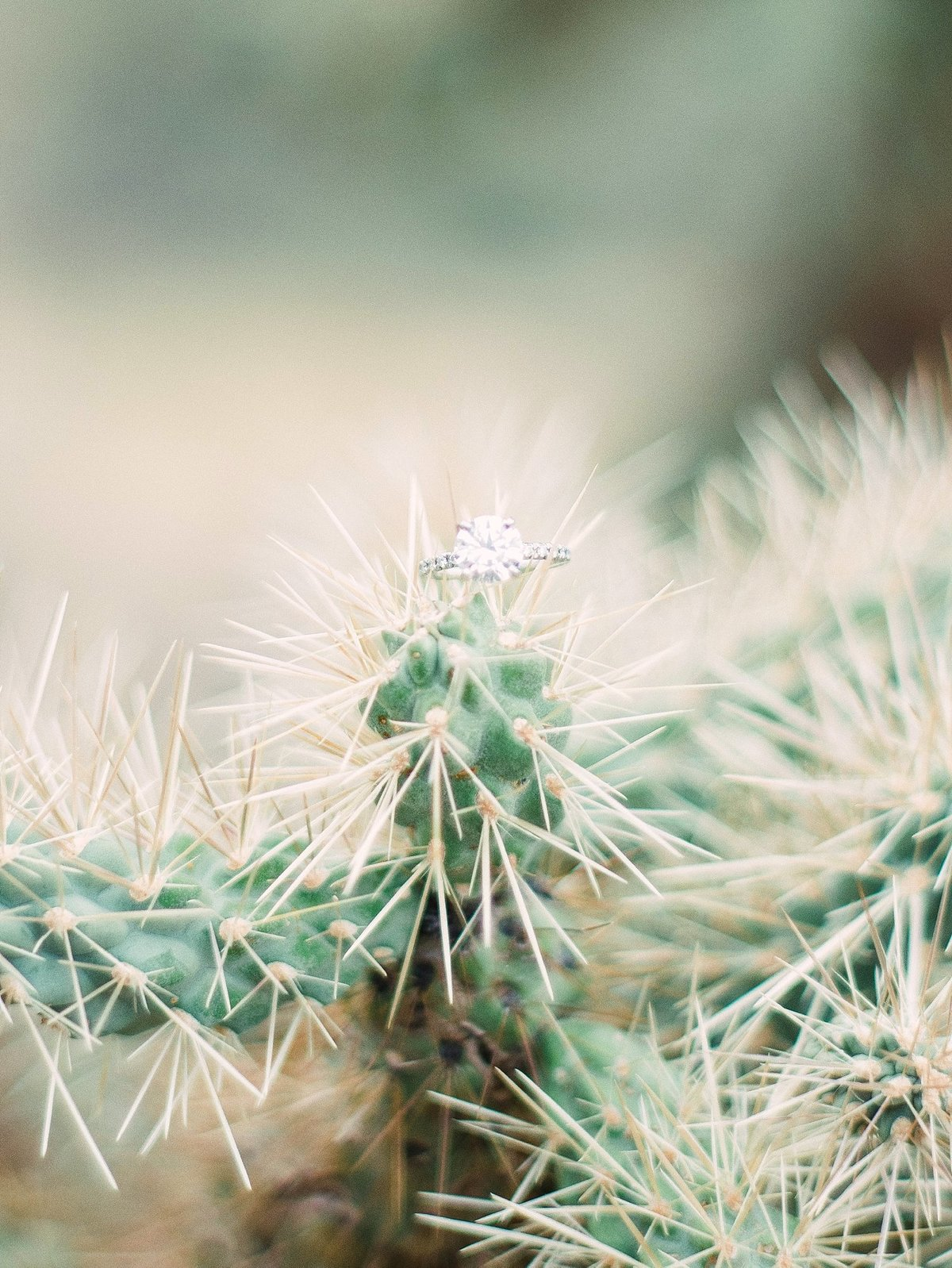 scottsdale-arizona-wedding-photographer-engagement-desert_0111