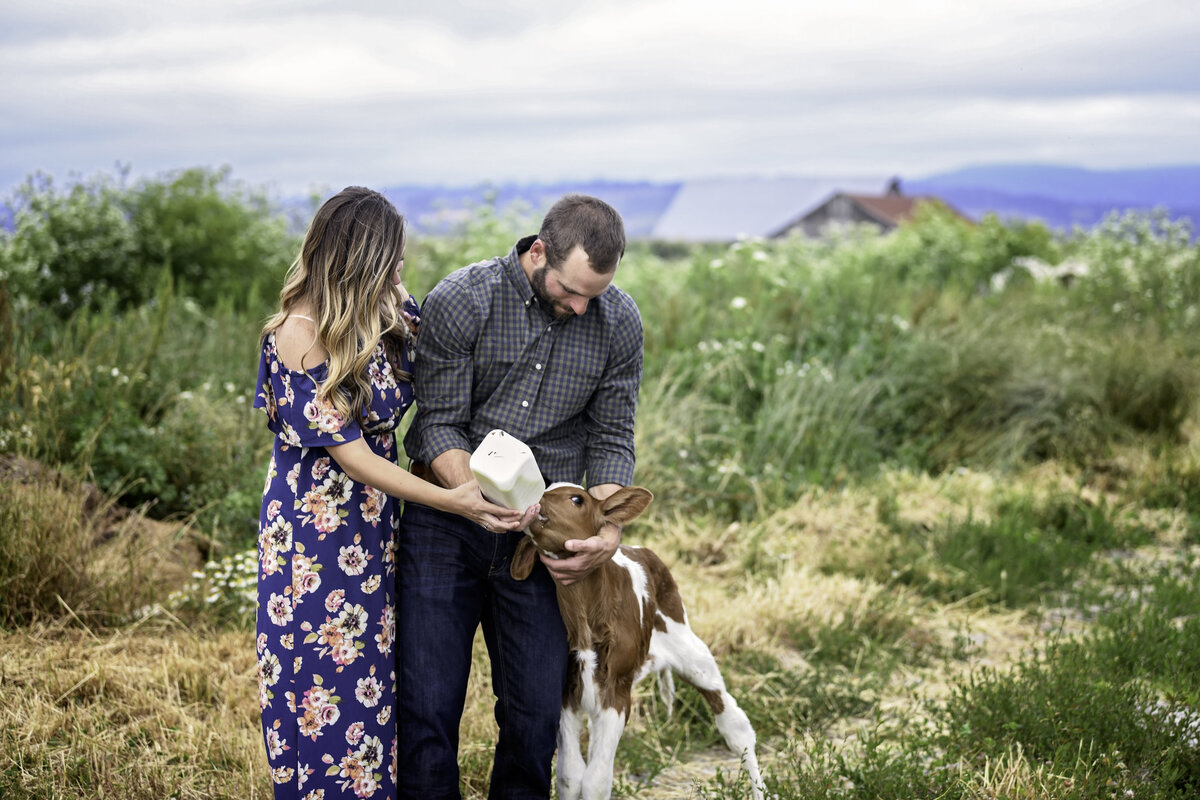 Redway-California-engagement-photographer-Parky's-Pics-Photography-Humboldt-County-Ferndale-Dairy-Farm-Cows-Engagement-15.jpg