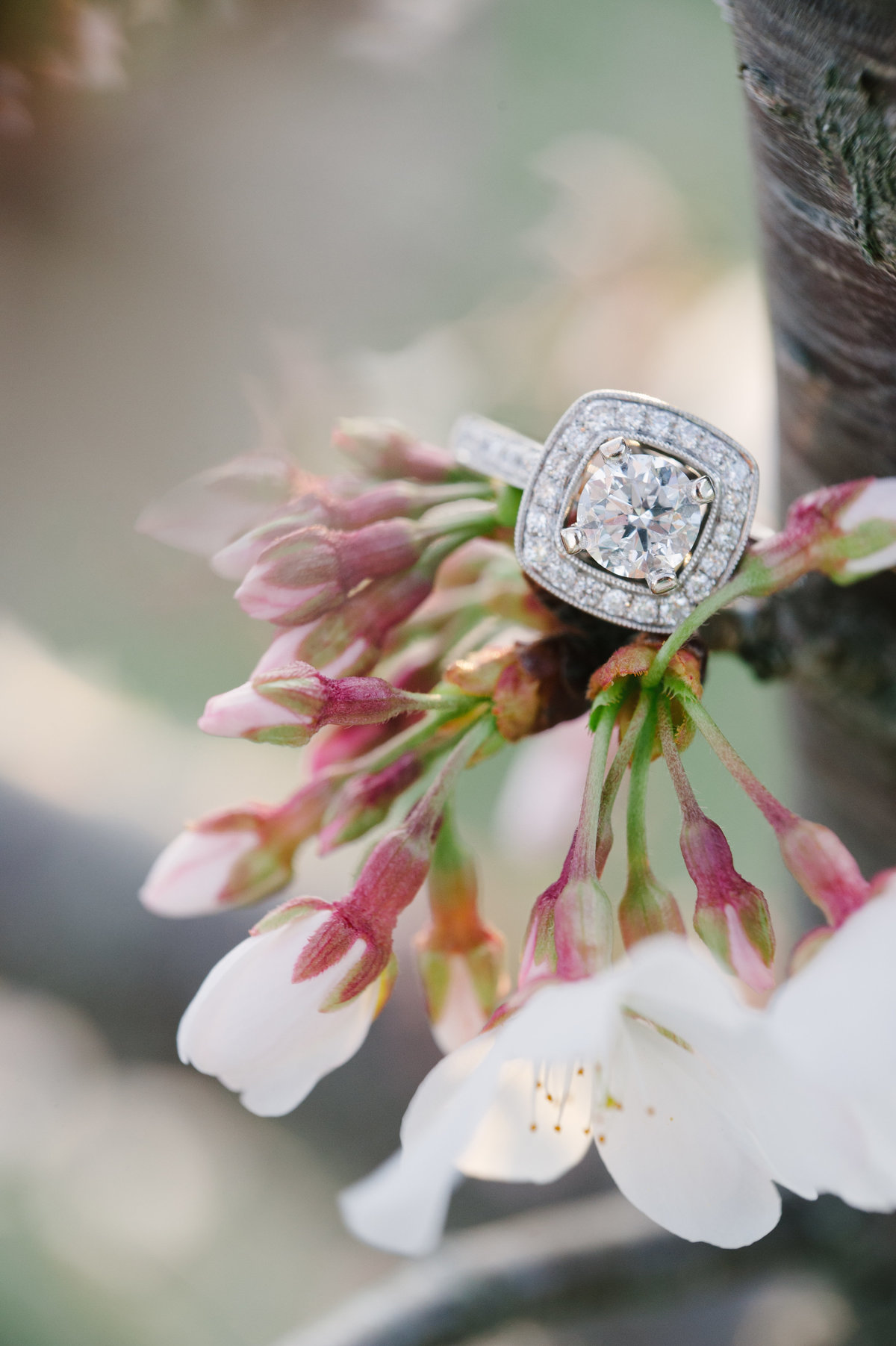 Spring Blooms and Engagement Ring in Atlanta