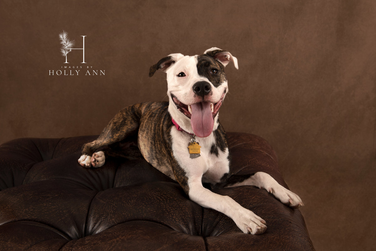 pet studio portrait session glens falls ny