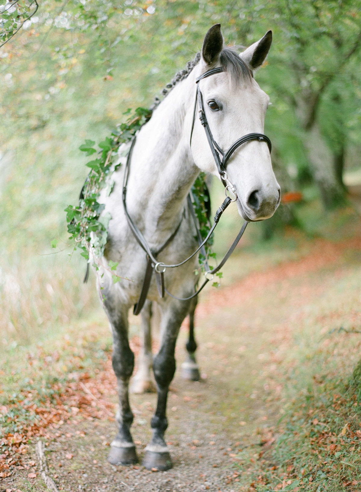 85-KTMerry-destination-weddings-horse-garland-Ireland