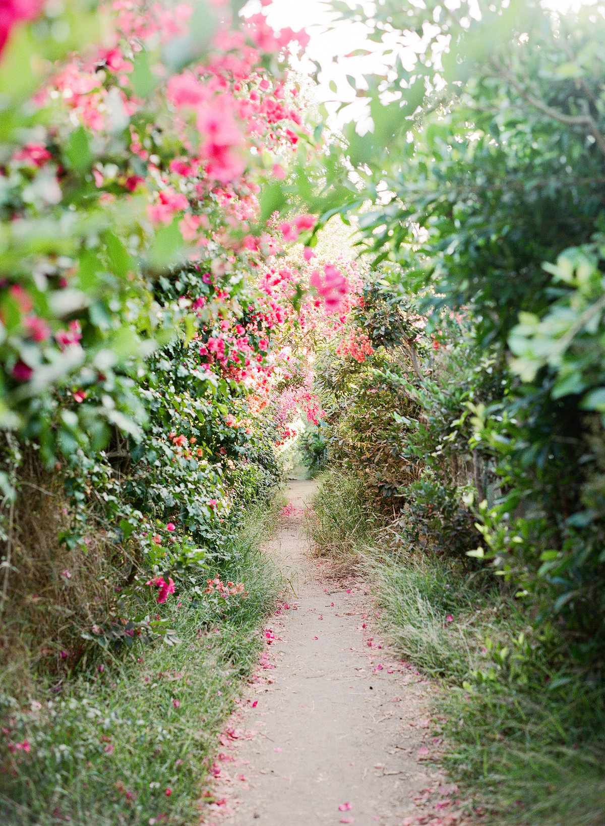 A lush garden portrait location with wild growing bougainvillea