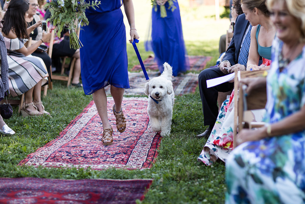 Monica_Relyea_Events_Dawn_Honsky_Photography_bride_and_groom_Nostrano_vineyard_ceremony_dog