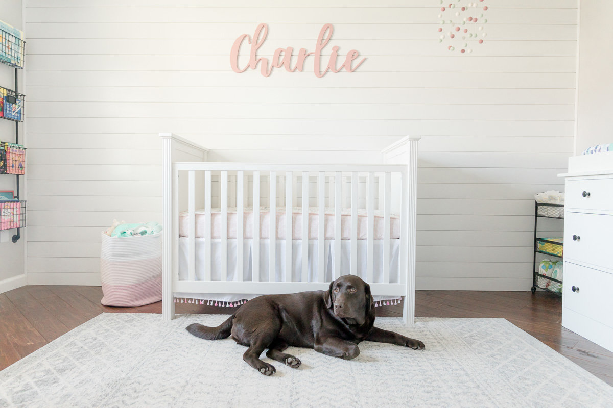 Doggy sister keeps watch over the newborn crib