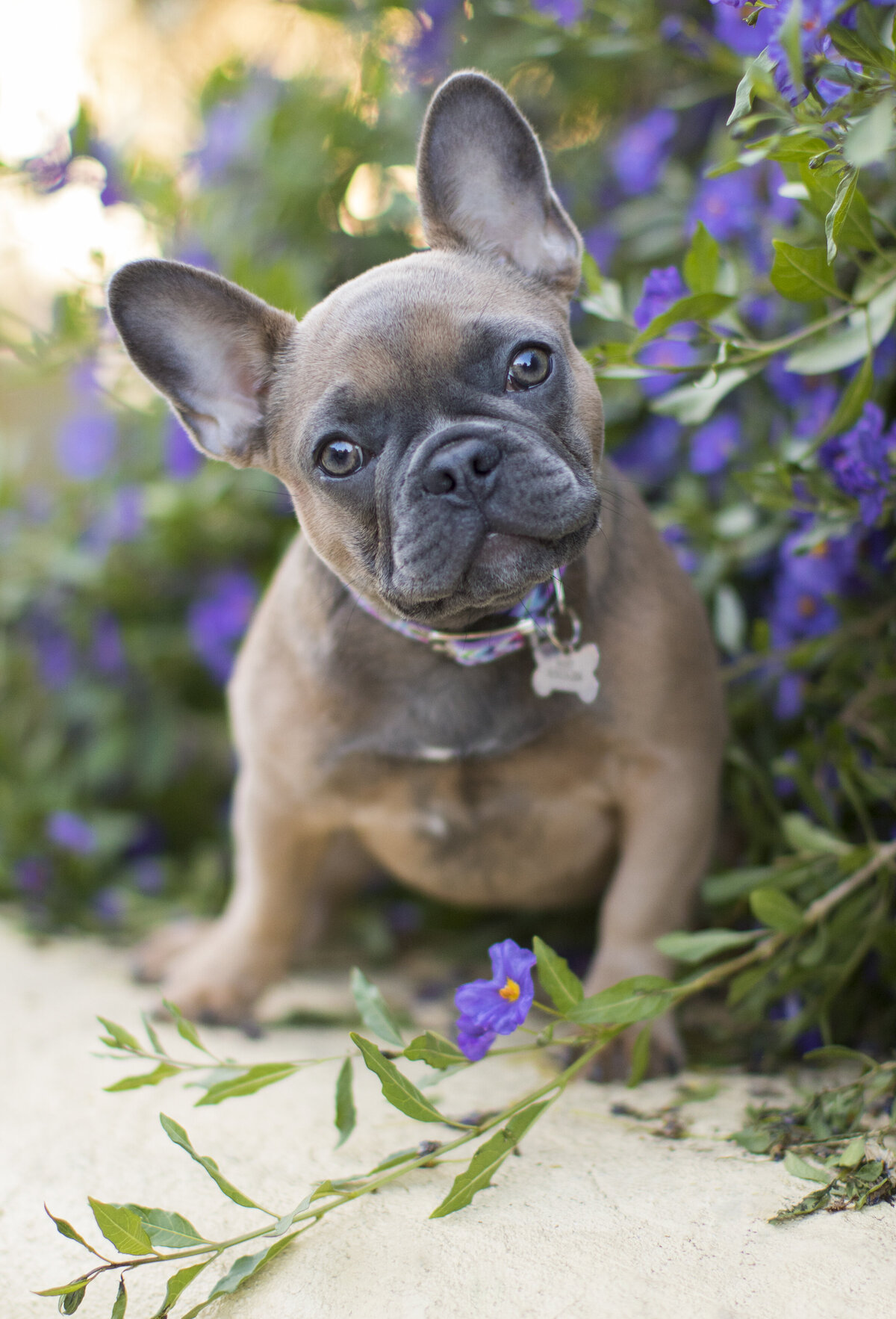 pet_photography_san_diego_1