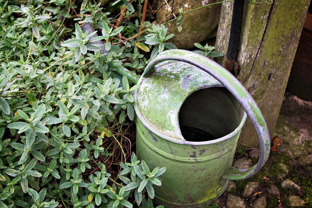 Wollerton Watering can & sage v2