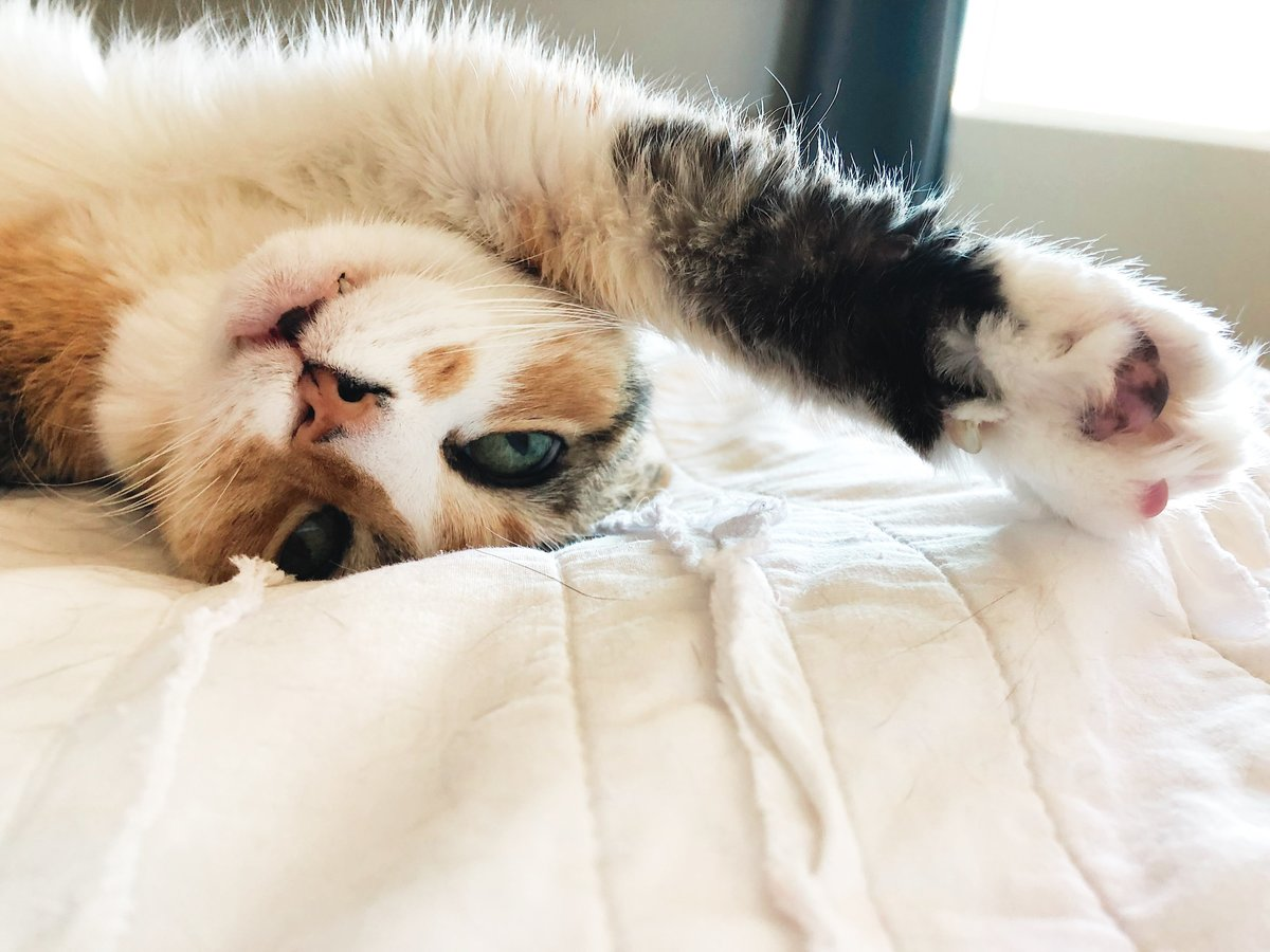 A cute cat looks at the camera from upside down