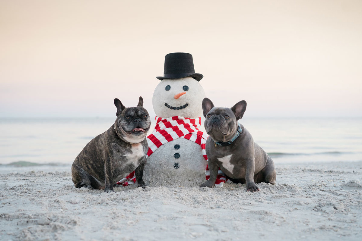 dogs-and-snowman