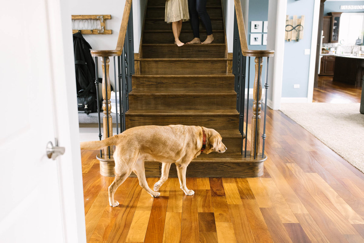 Puppy walking as mom and daughter walk down the stairs