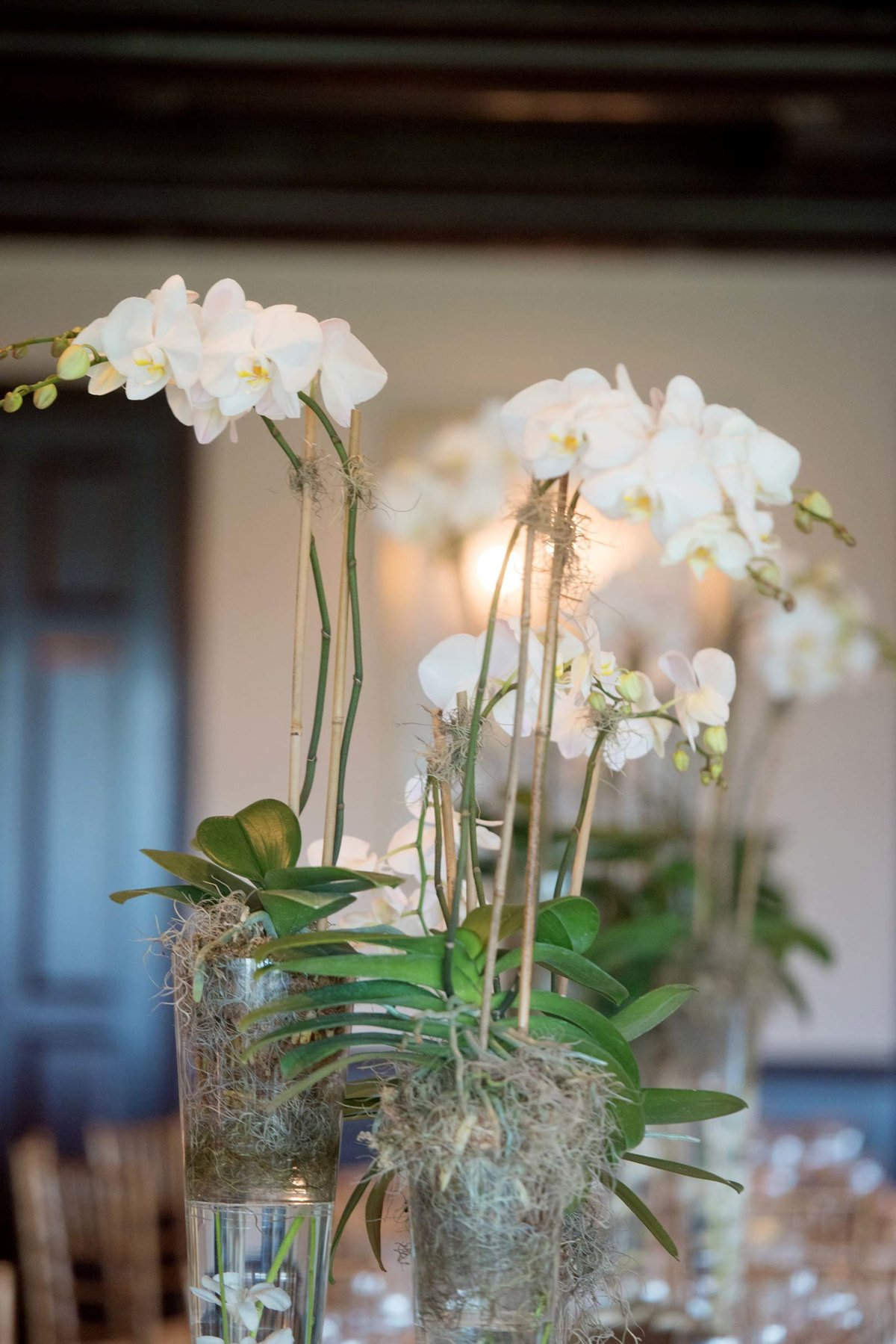 Orchids at Huntington Crescent Club