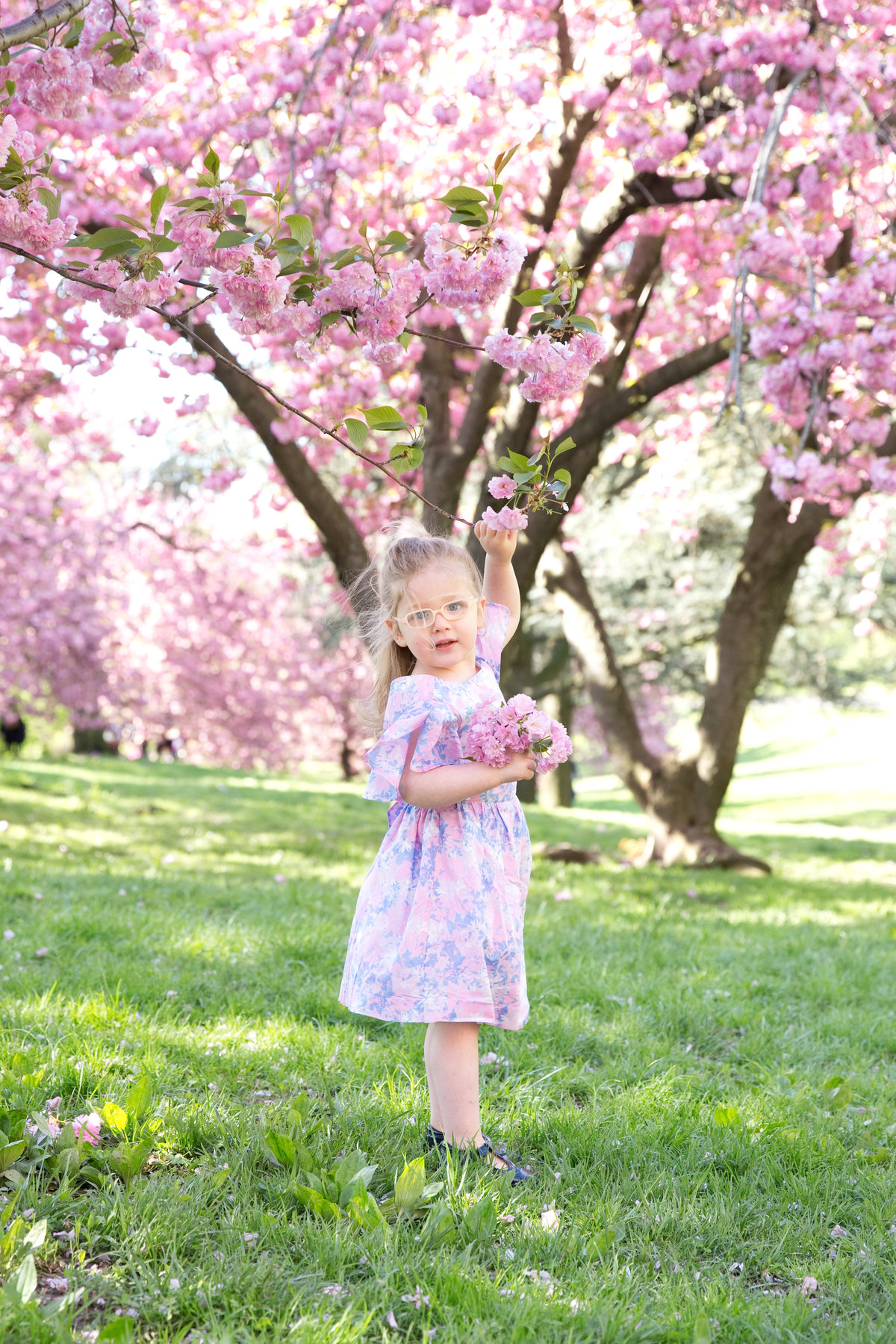 Little girl reaches for cherry blossom in central park.