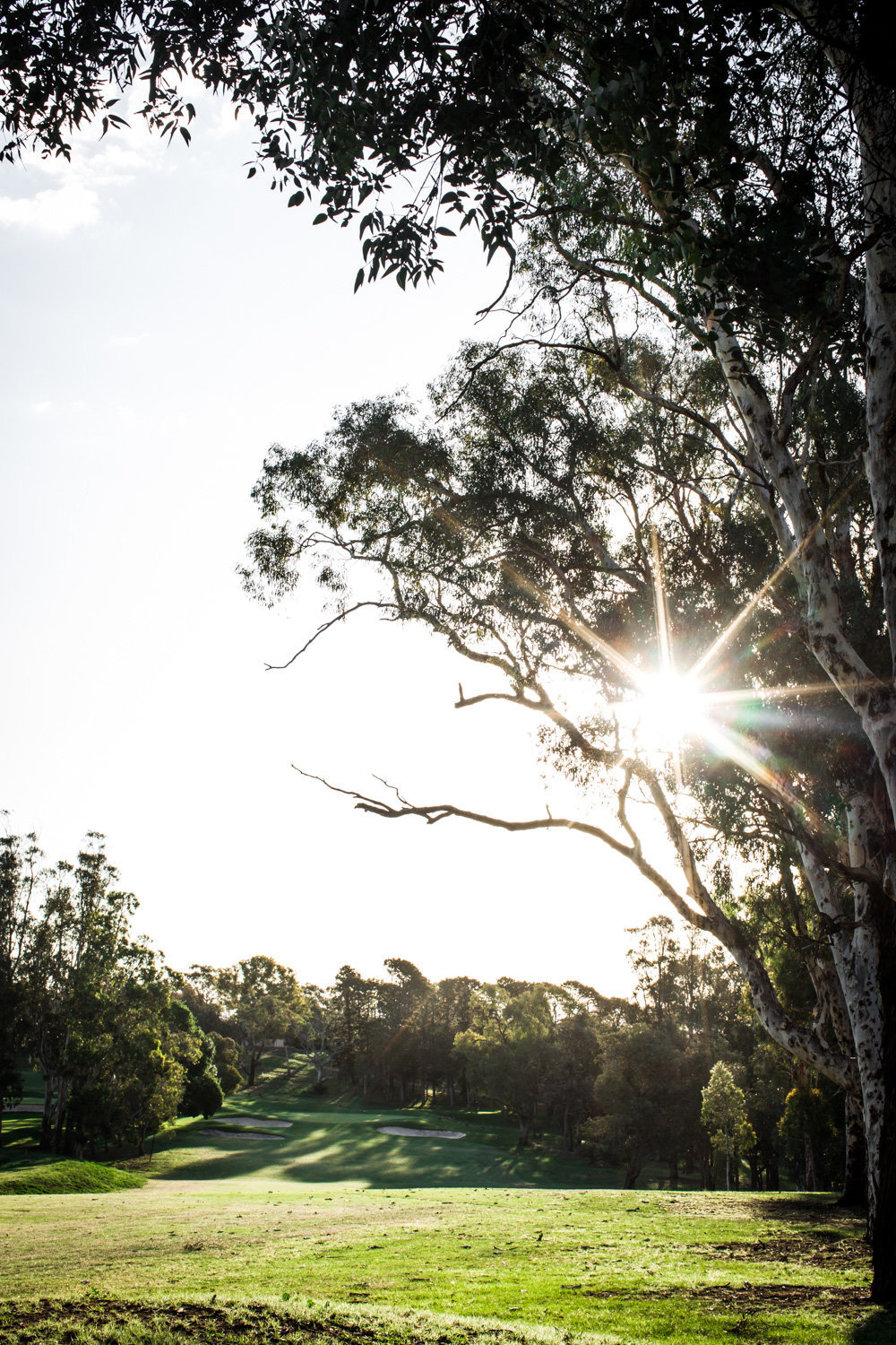 Capital Golf Course - DOMA The Parks Red Hill - Anisa Sabet - Photographer-175