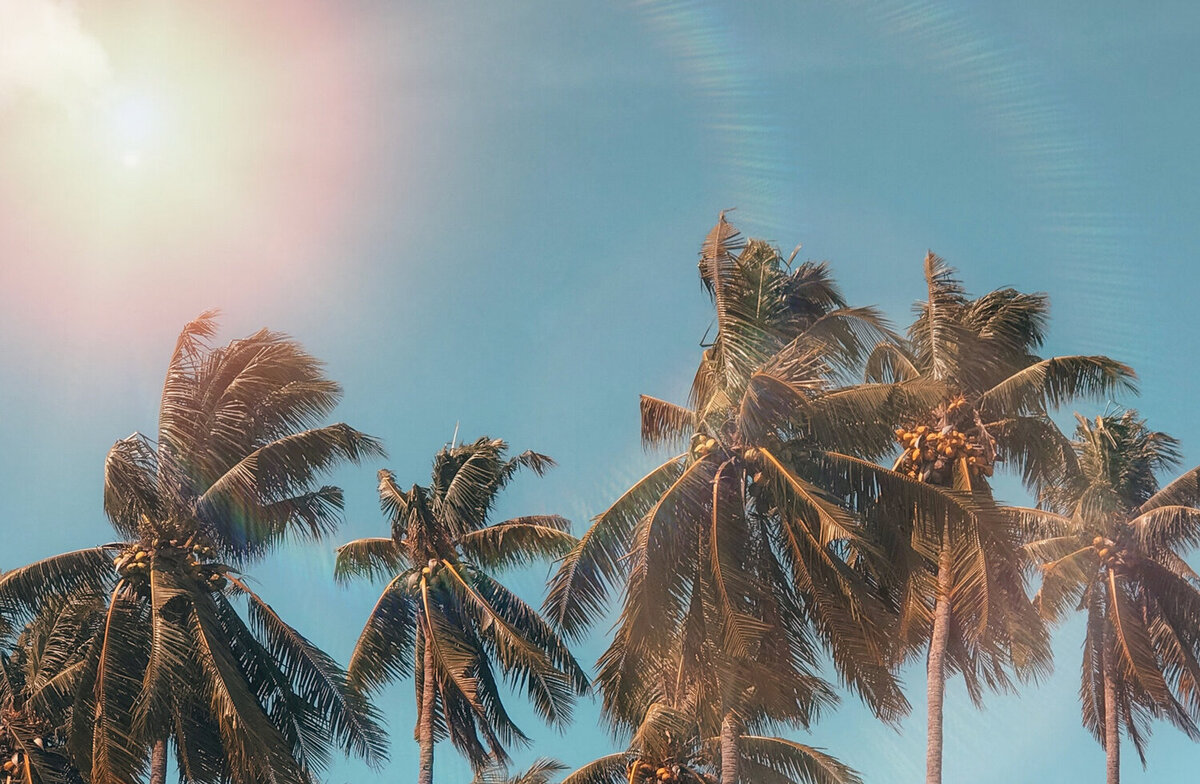 [PenelopeTemplate]coconut-dawn-daylight-exotic-1152359
