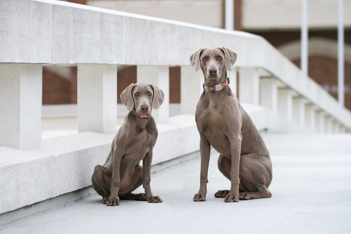 Two Dogs Photographed at University of Richmond