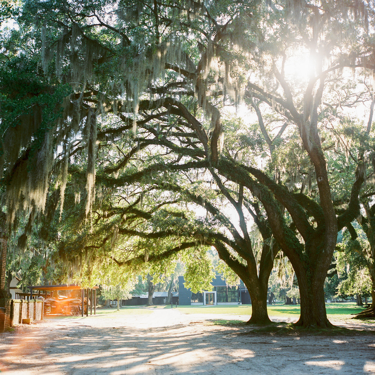 charleston-wedding-venues-middleton-place-philip-casey-photography-043