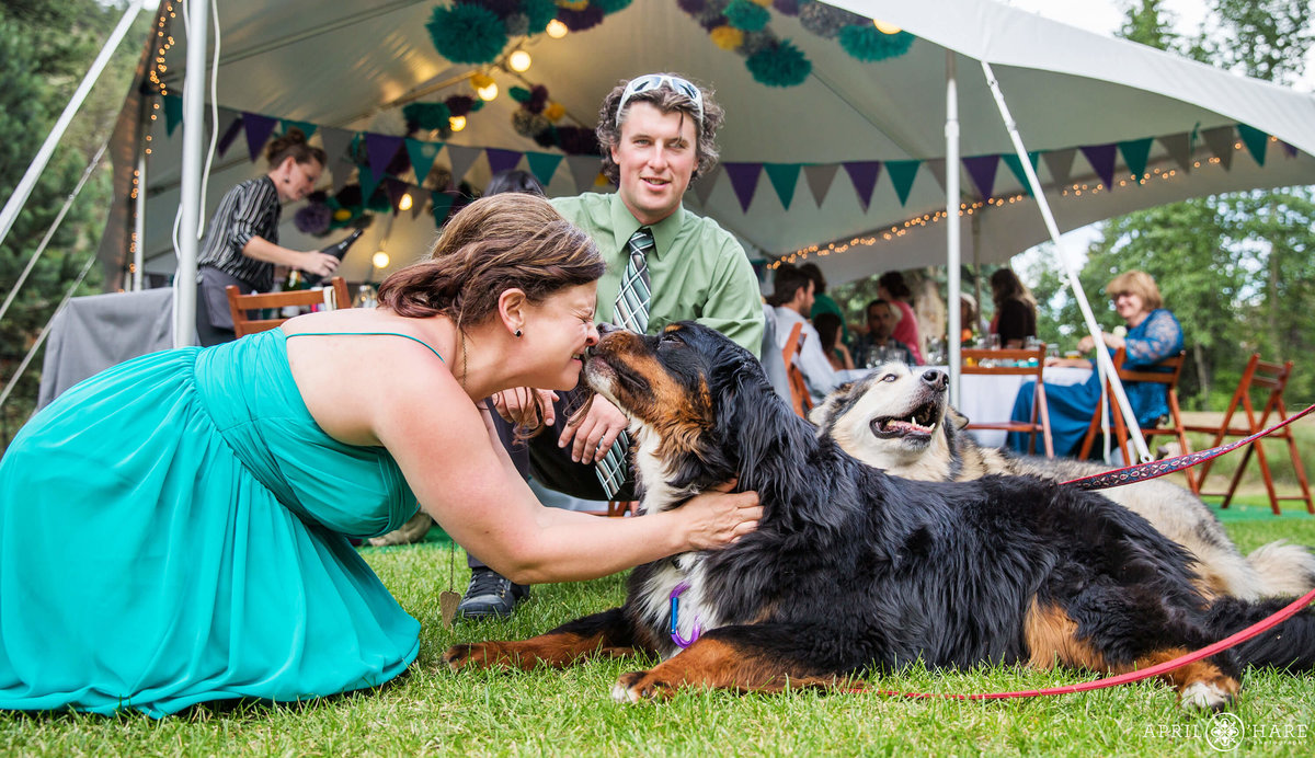 Doggie Kisses at an outdoor tent wedding reception at Fall River Estes park Condos