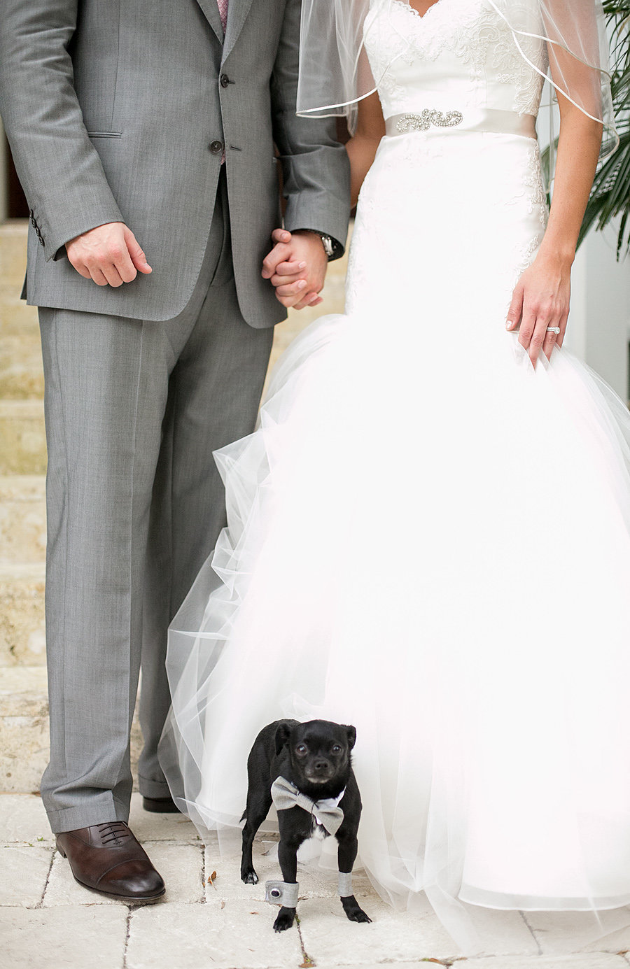 jupiter wedding with puppy ring bearer, dog at wedding