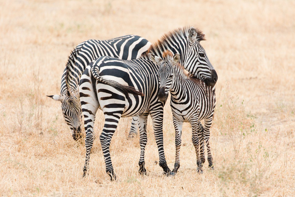 tanzania-african-safari-wildlife-photography