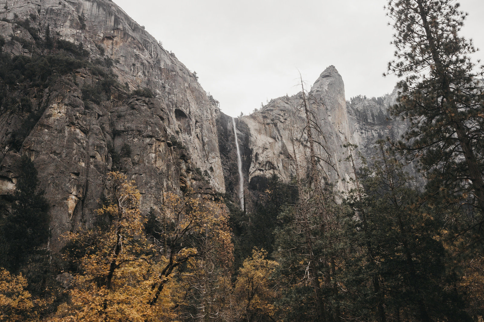 athena-and-camron-how-to-elope-in-yosemite-valley-lower-valley-woods7