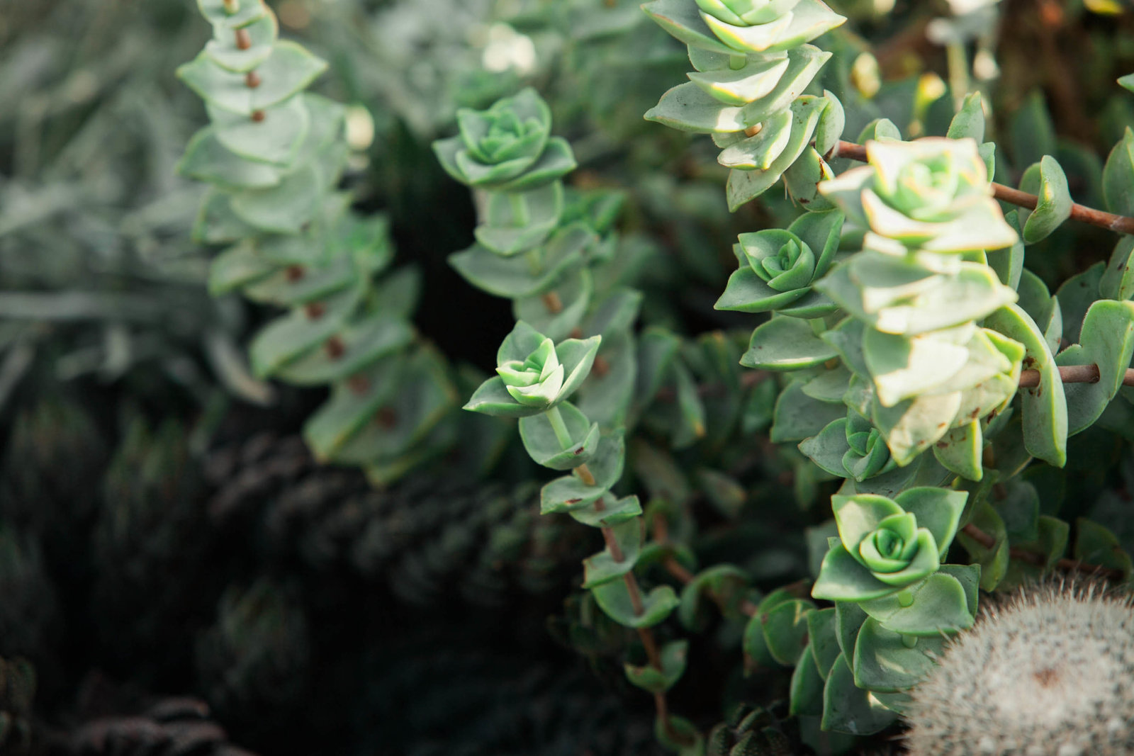 succulent-garden-pennsylvania-nature-kate-timbers-photography-1392