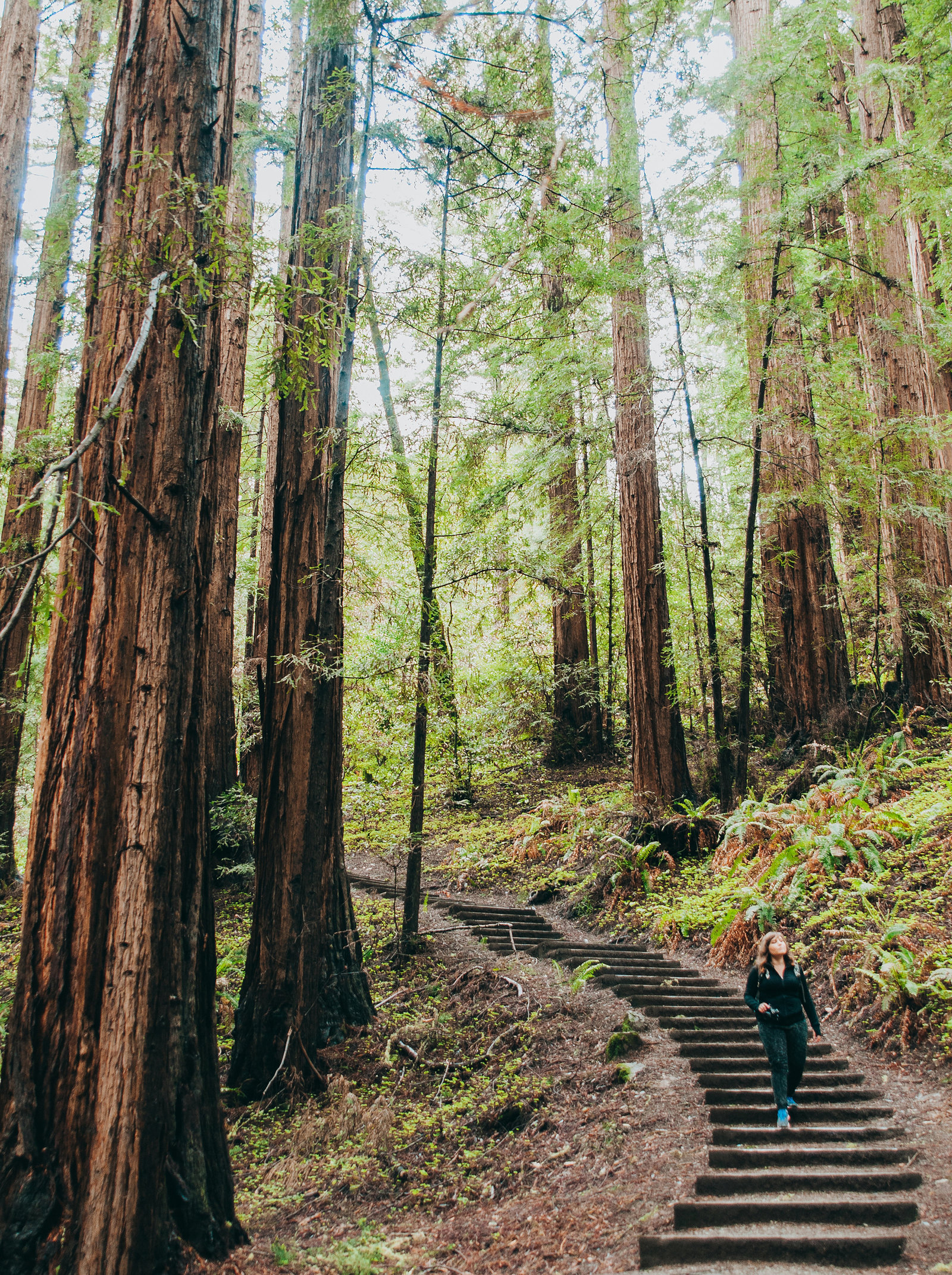 Muir-Woods-Wedding-Photographer