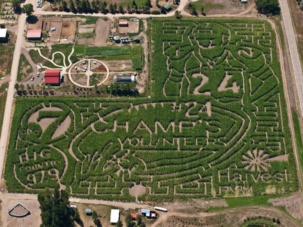 Fort Collins Colorado Corn Maze