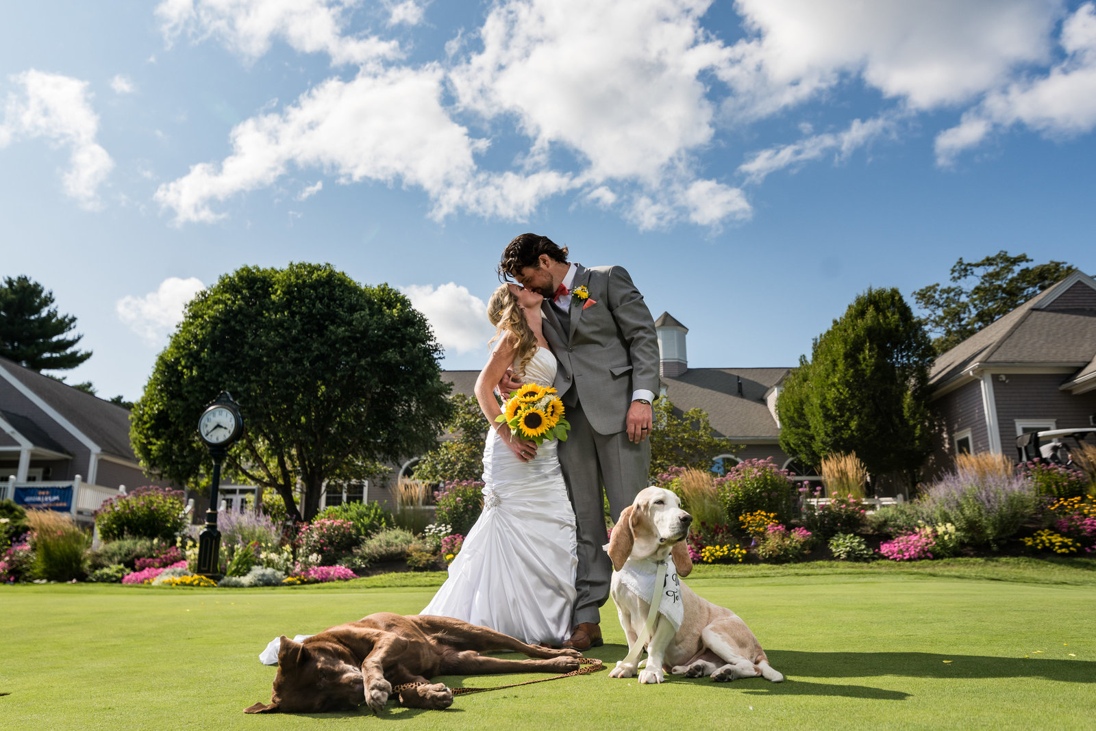 wedding couple on a golf course with dogs