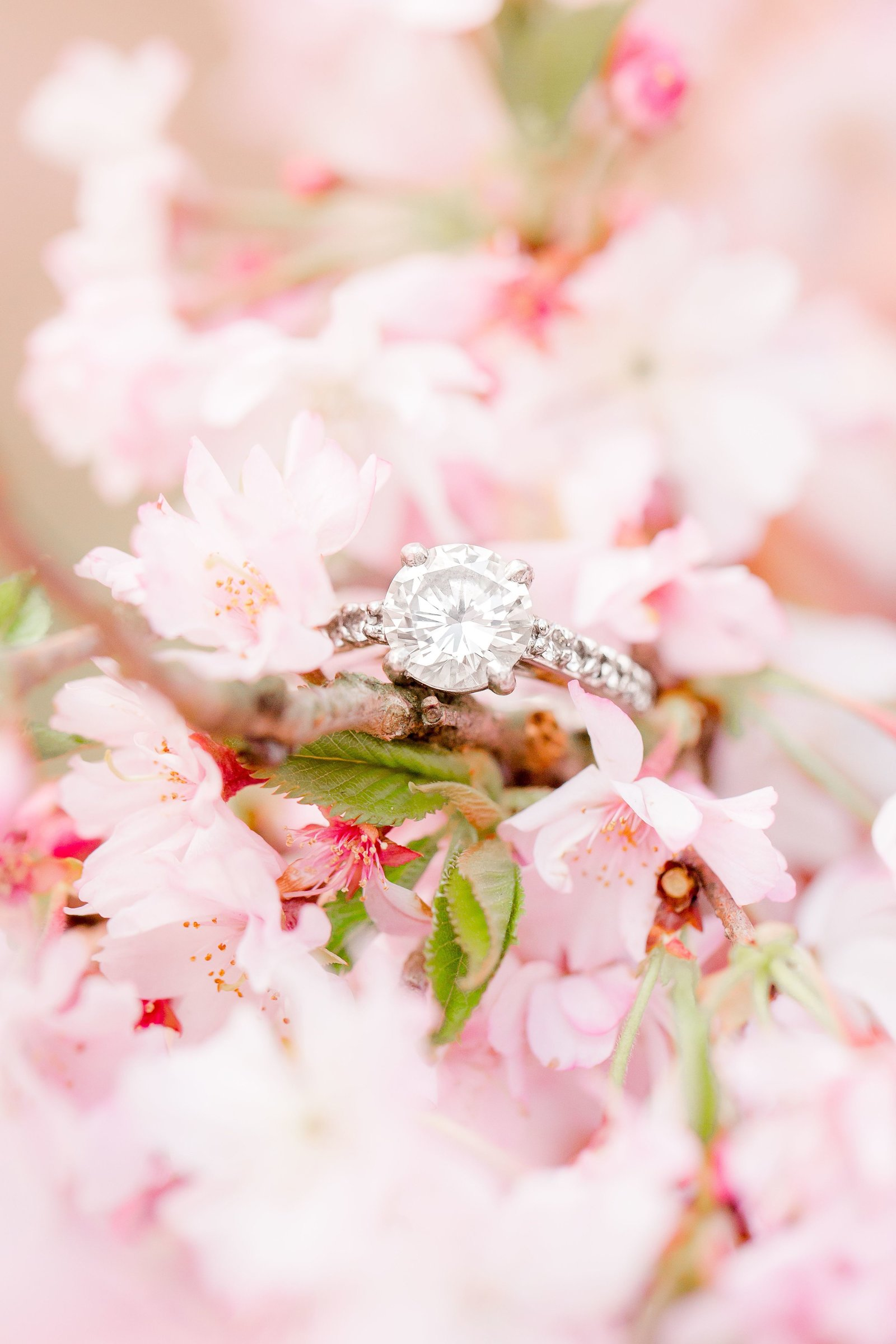cherry-blossom-engagement_0017
