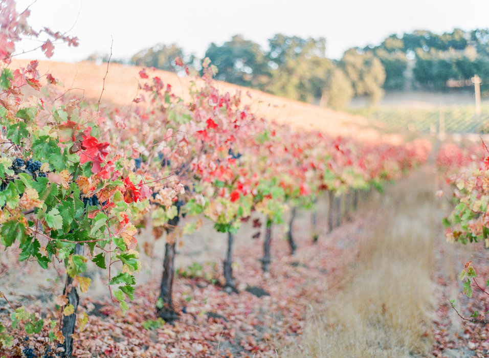 Molly-Carr-Photography-Paris-Film-Photographer-France-Wedding-Photographer-Europe-Destination-Wedding-HammerSky-Vineyards-Paso-Robles-California-Wine-Country-44