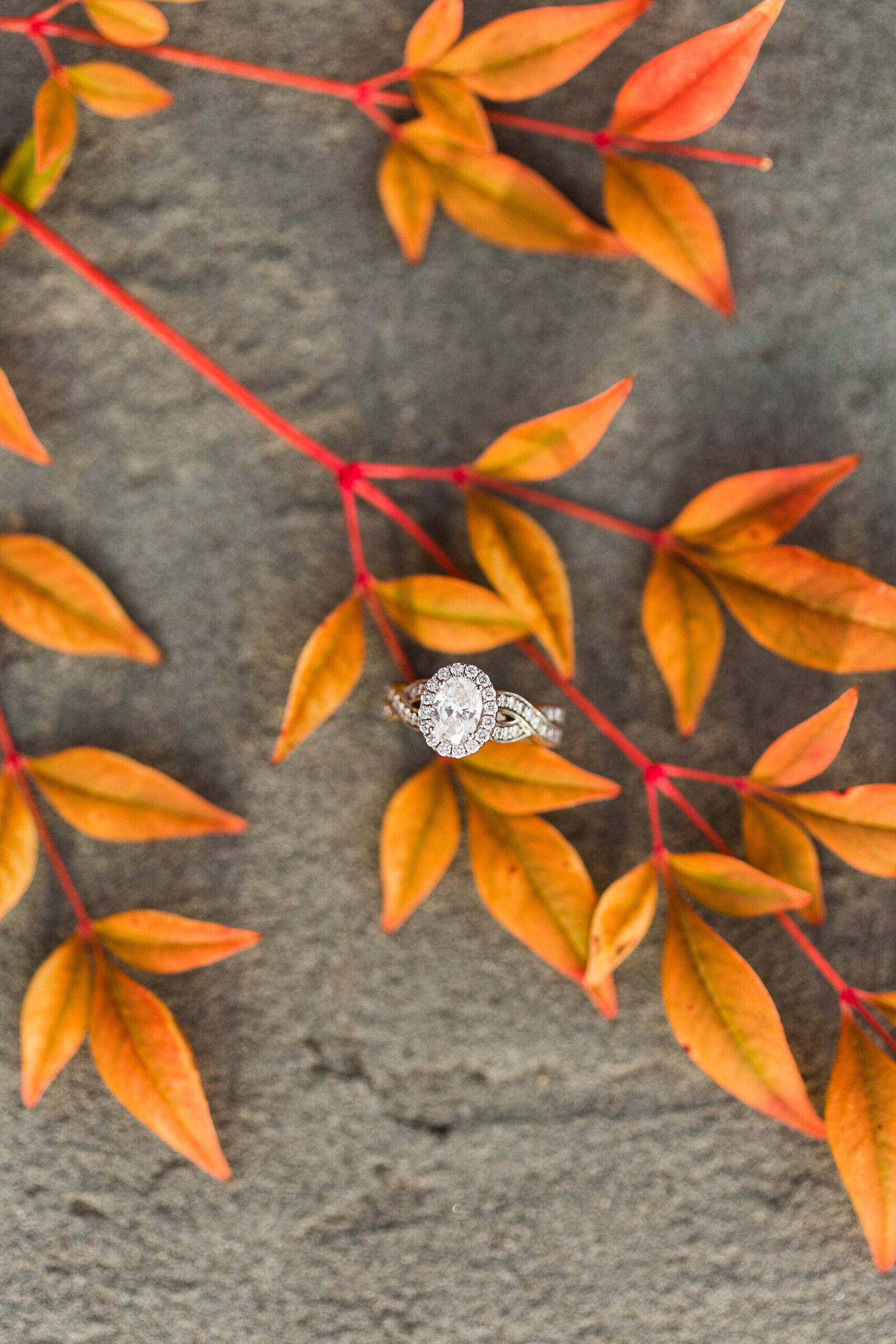 Fall Mountain Engagement Session in the Shenandoah Valley-9