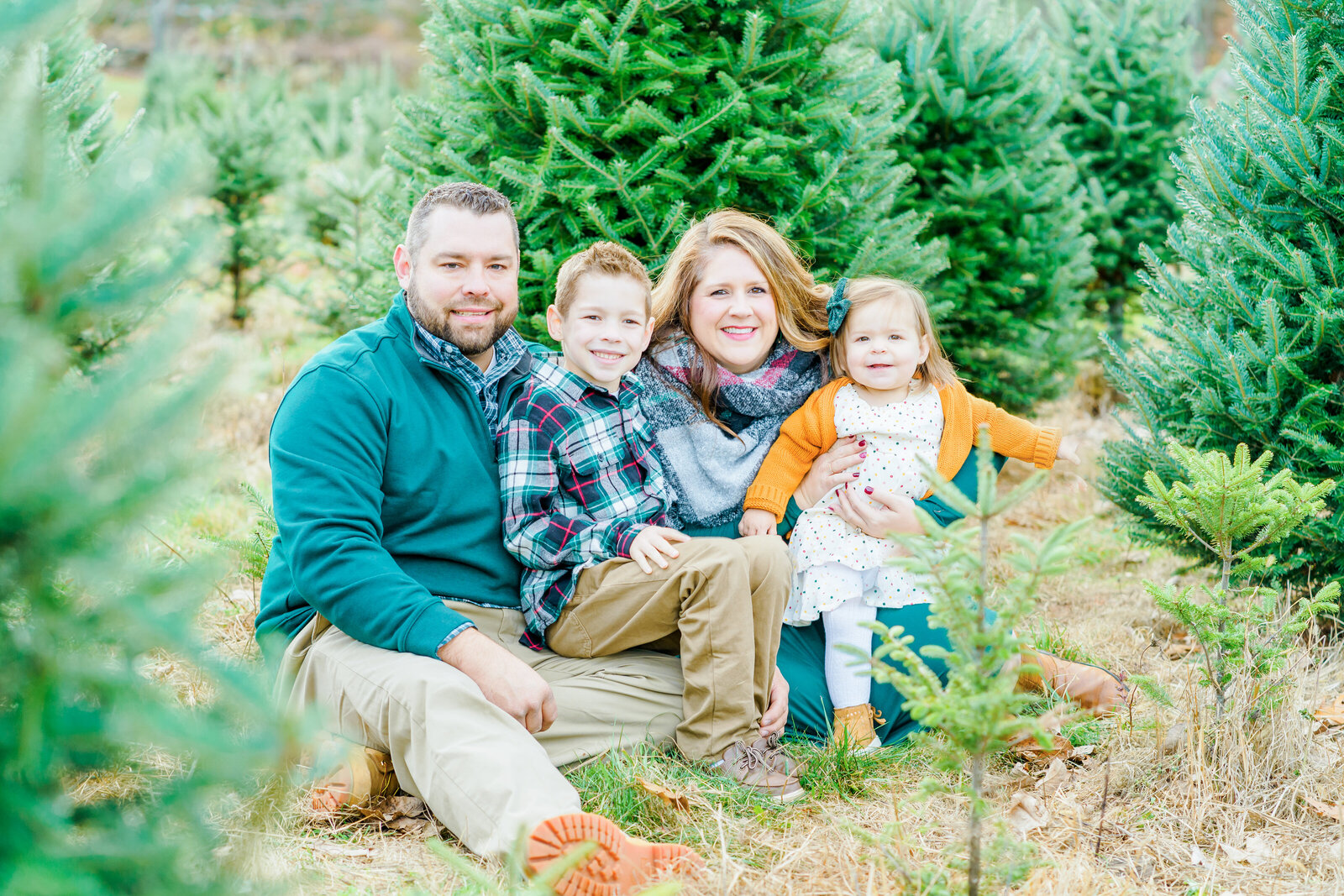 New Hampshire family photo in tree farm