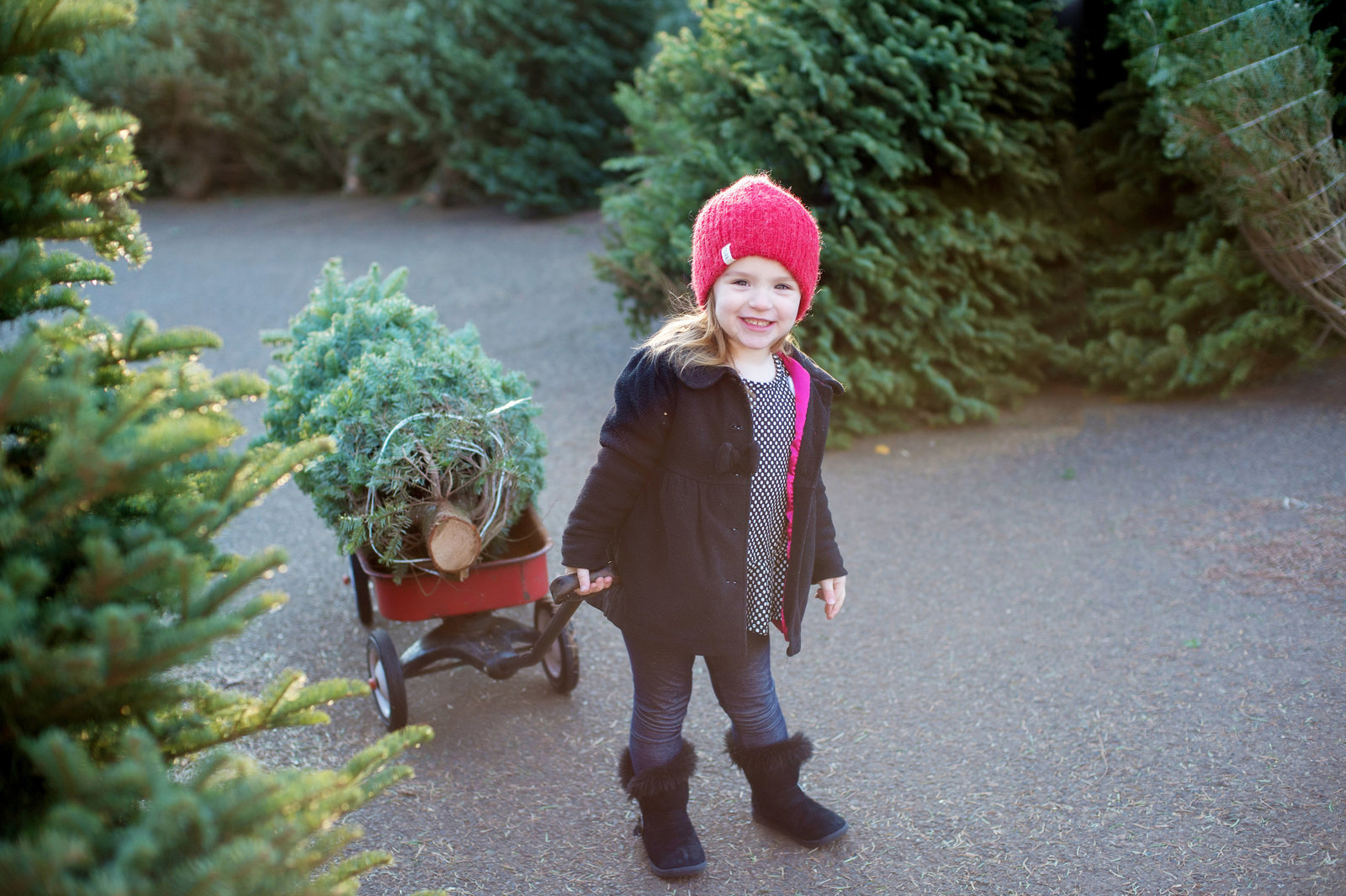 a little girl pulls a christmas tree in a radio flyer wagon at a christmas tree lot
