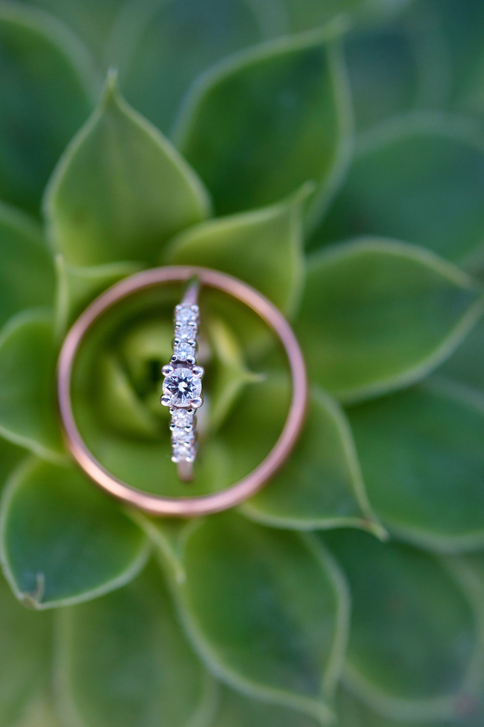 pretty wedding rings on a succulent