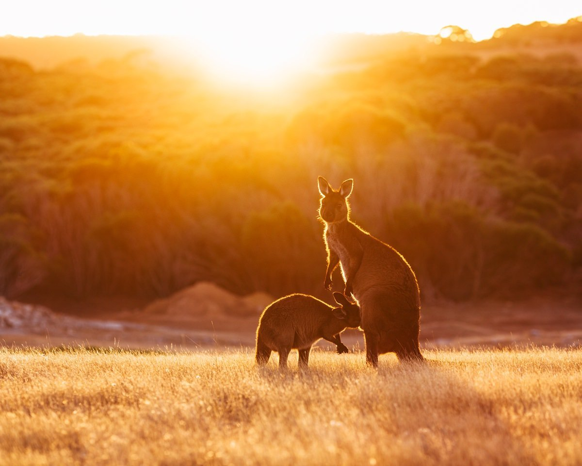 cameron-zegers-travel-photographer-kangaroo-island-australia-sunset-portrait