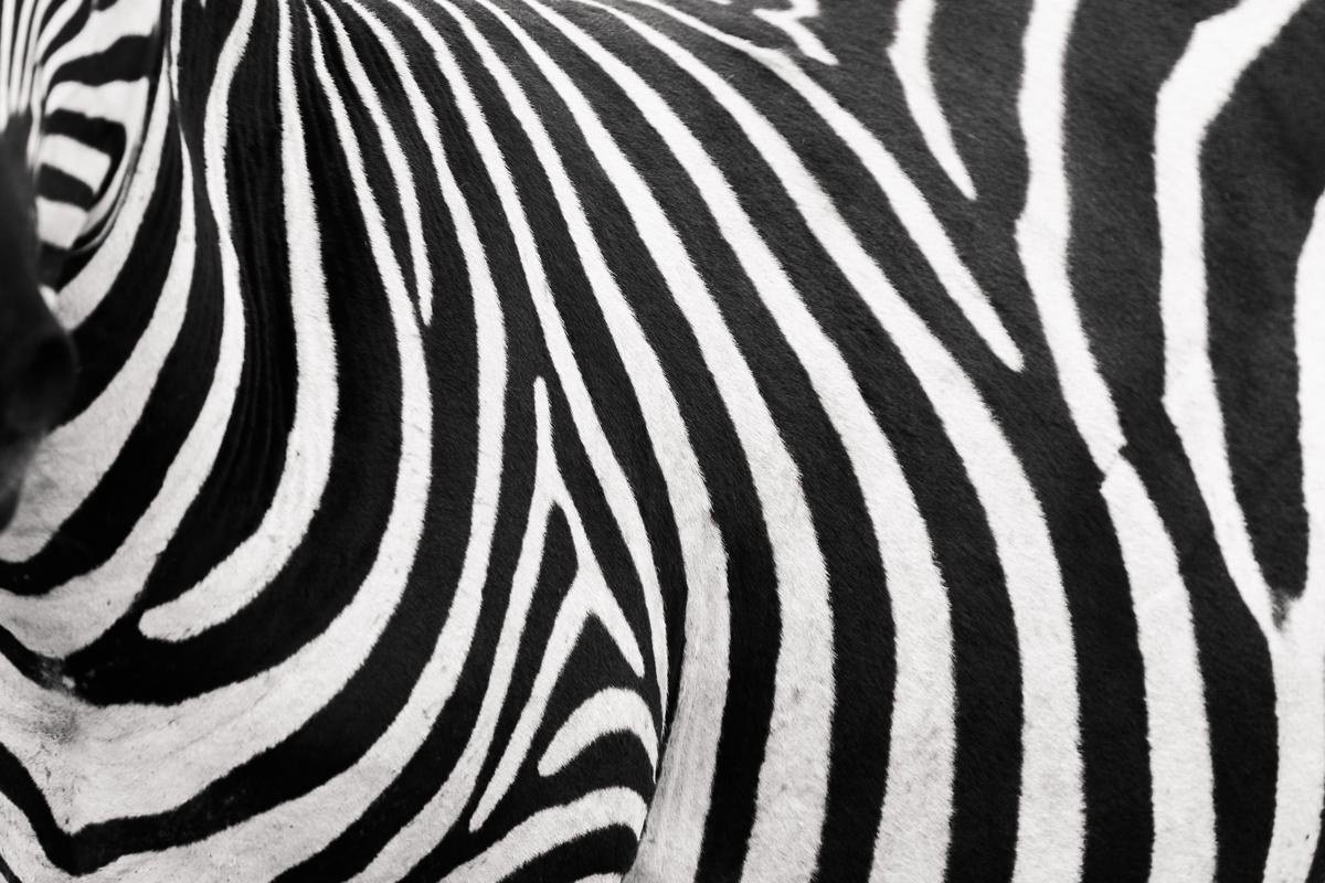 zebra-stripes-travel-photographer-tanzania-cameron-zegers