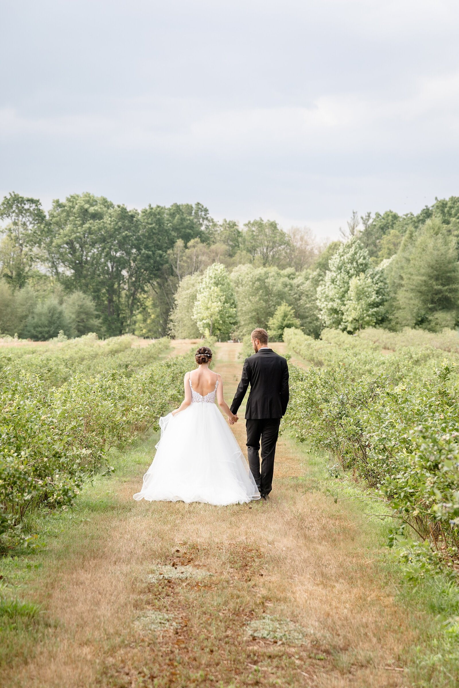 Couple-walks-holding-hands-between-rows-of-blueberries-at-arrowwood-farms-on-their-wedding-day