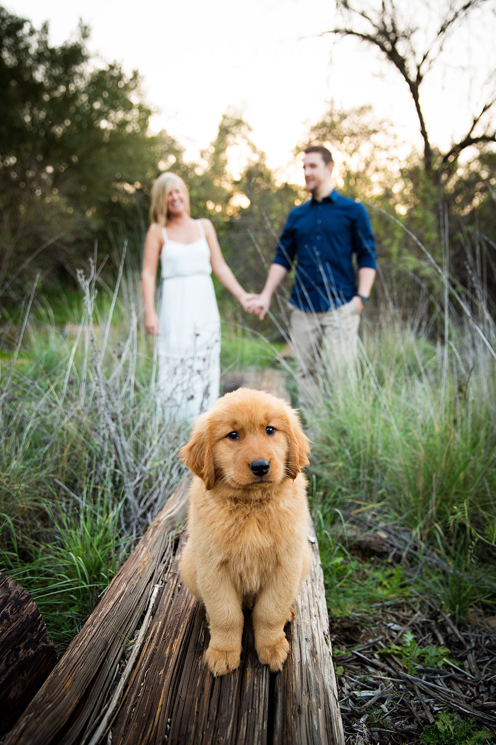 Mission Trails engagement photos cute dog with couple