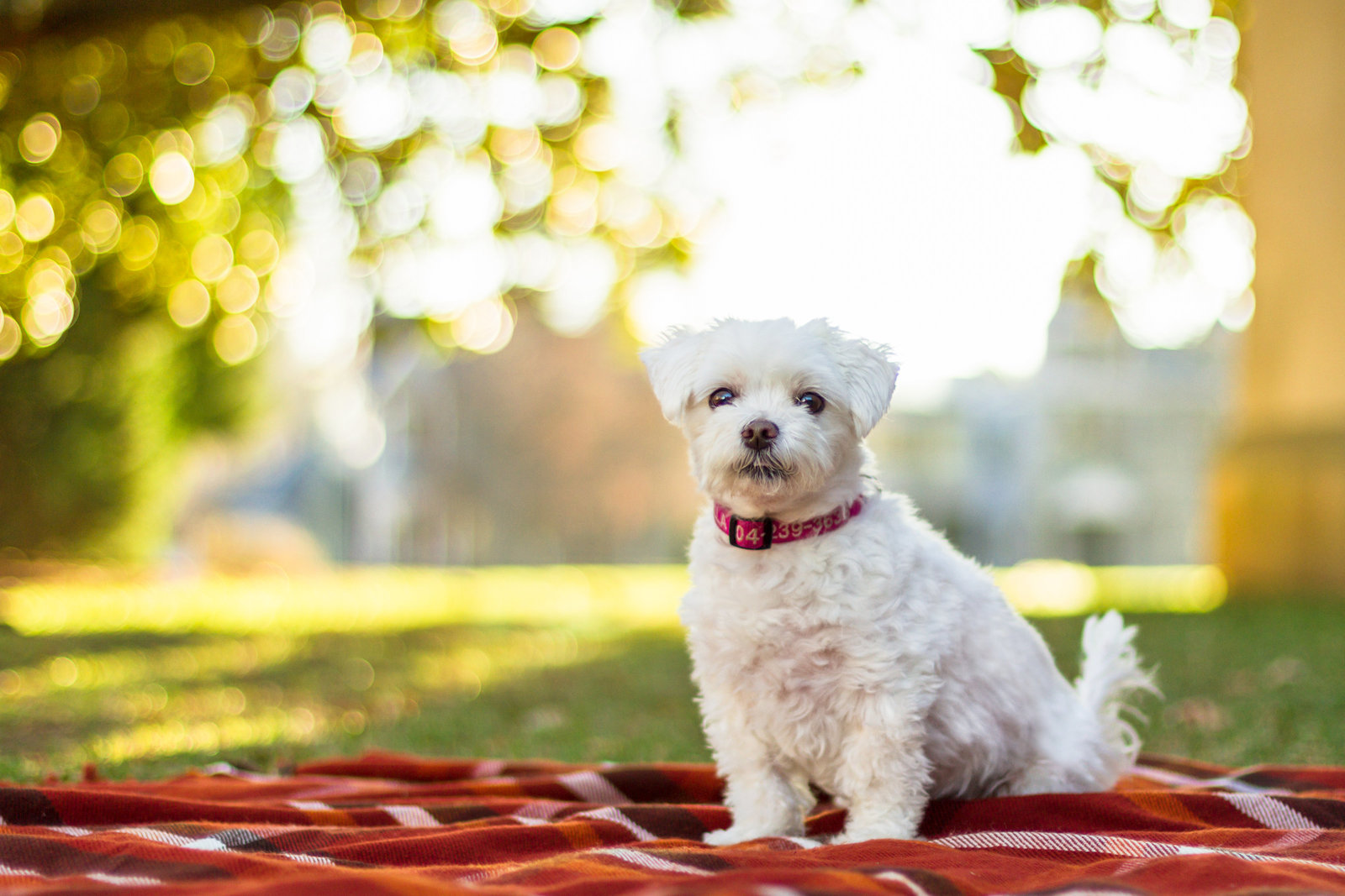 Small dog poses in Richmond Virginia