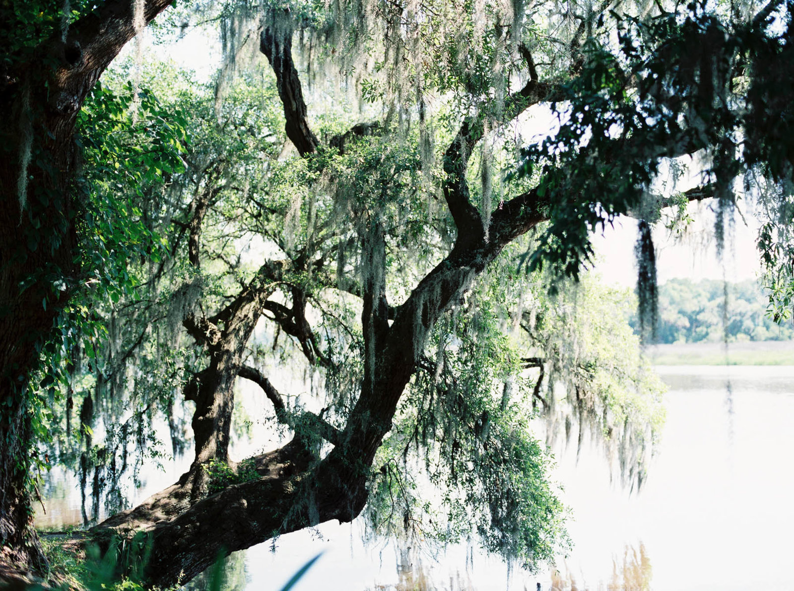 oak tree and spanish moss by the water, Magnolia Plantation, Charleston Wedding Photography.