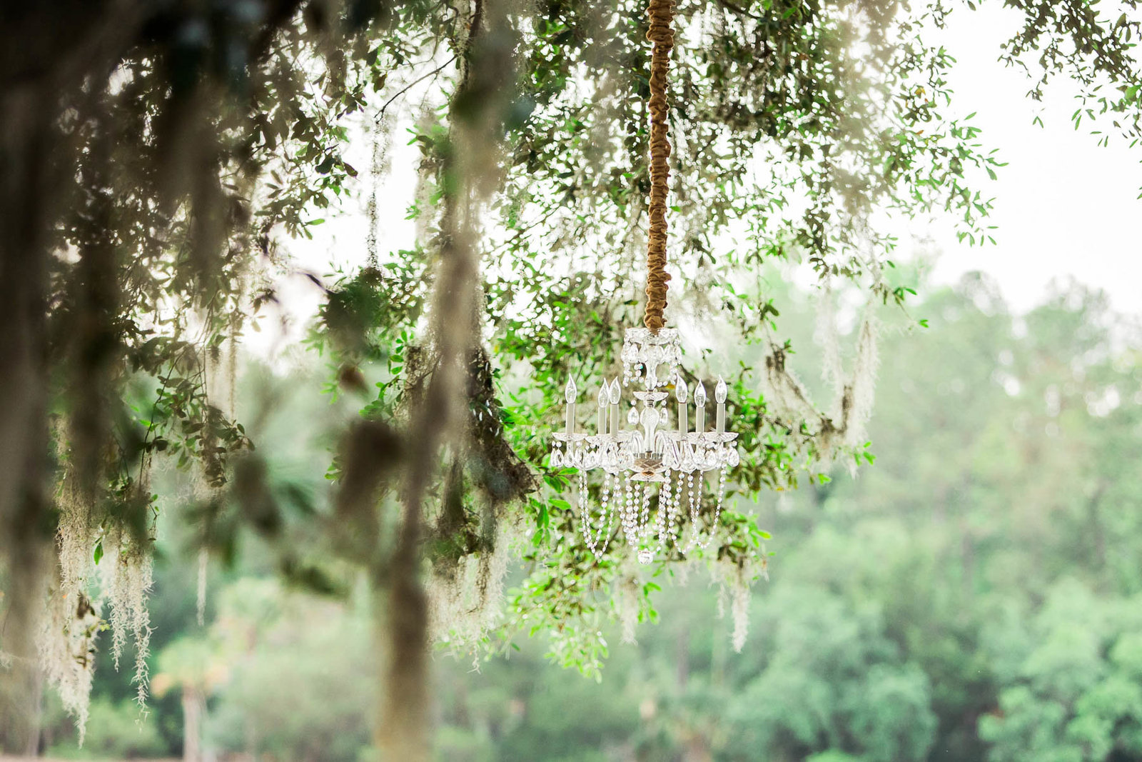 Chandelier hangs from oak tree, Dunes West Golf and River Club, Mt Pleasant, South Carolina