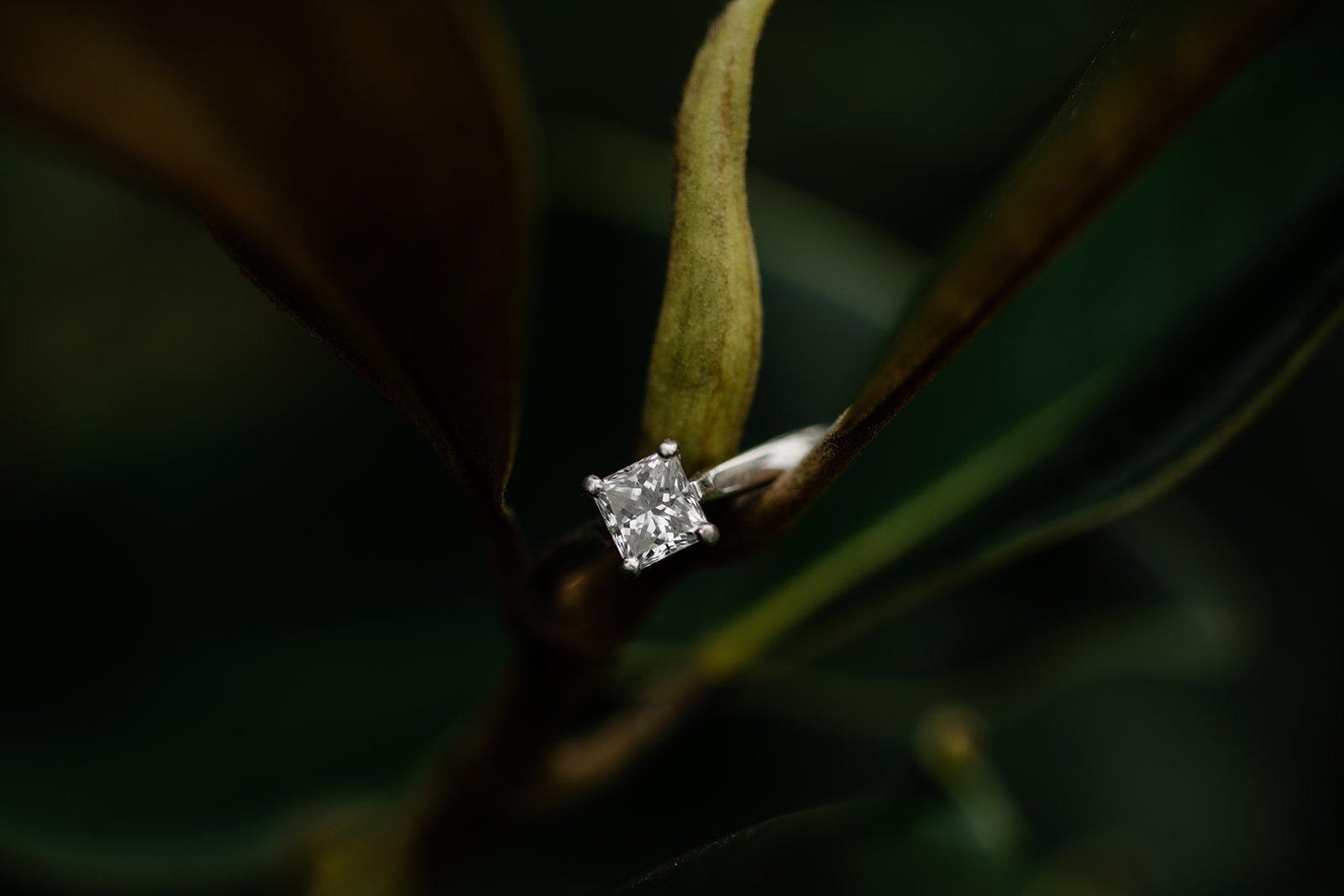 Weiss_Engagement-49
